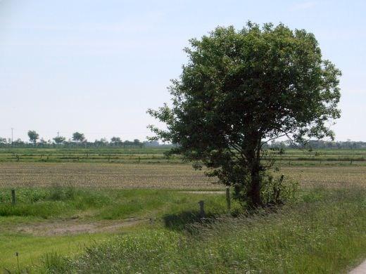Fotos Felder und Wiesen in Nordfriesland